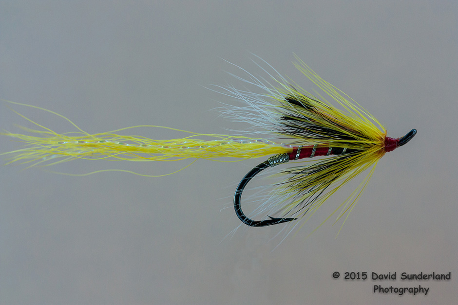 Ally's Shrimp, yellow